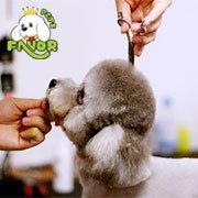 圣宠宠物美容师培训学校